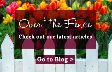Blog - Over The Fence